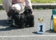 Annife Anyvon z Oderských vrchů štěňata VN1,Nejlepší štěně