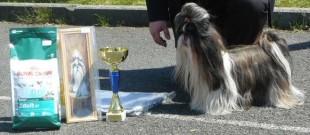 Cleopatra Merlot vítězů V1,CAC Klubový vítěz fena